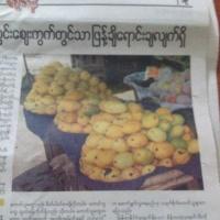 ミャンマーのセインタロンマンゴー