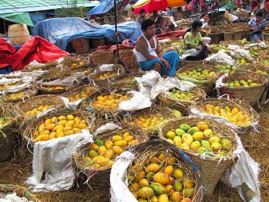 ローカル市場向けに出荷された各地のマンゴー
